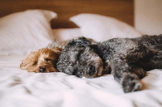 Cleaning Up After Pets: Budget-Friendly Tips for Dog Owners