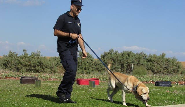 Working Dogs - Detection Dogs - myDoggySocial