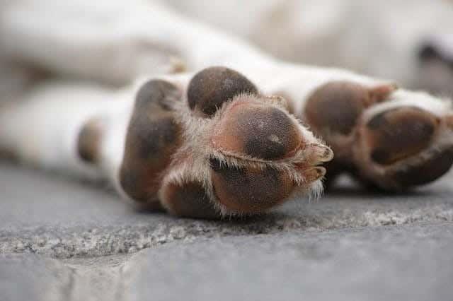 Dog Paw Pads - myDoggySocial
