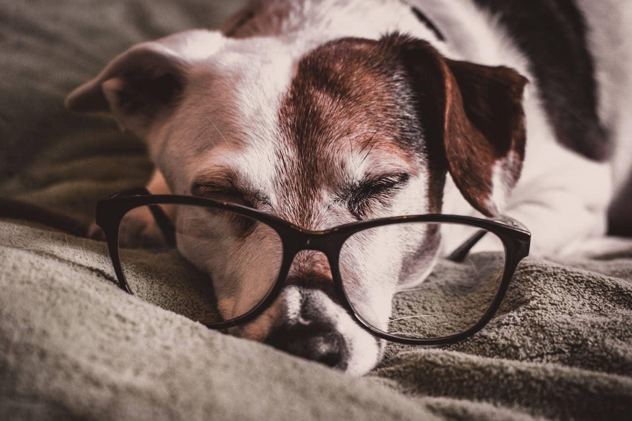 Streaming TV for Dogs - DogTV! - myDoggySocial