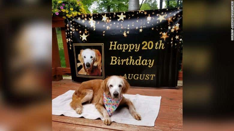 Oldest Golden Retriever in history celebrates 20th birthday - myDoggySocial