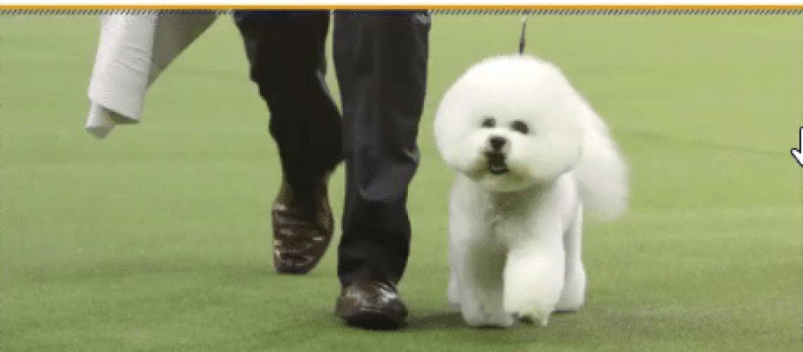 2018-02-14 18_52_15-Westminster Dog Show (@WKCDOGS) _ Twitter