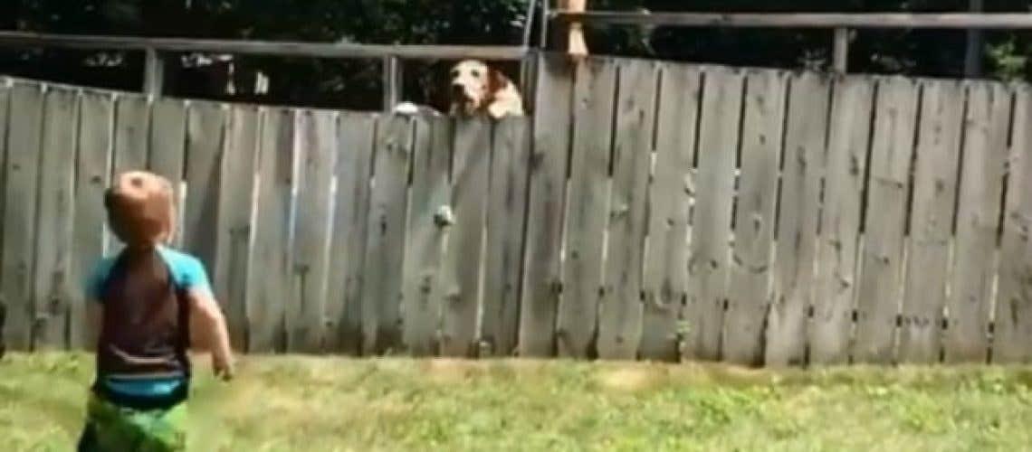 dog fetch fence