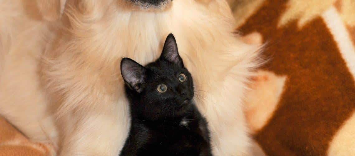 dog-and-cat-2908810_1920
