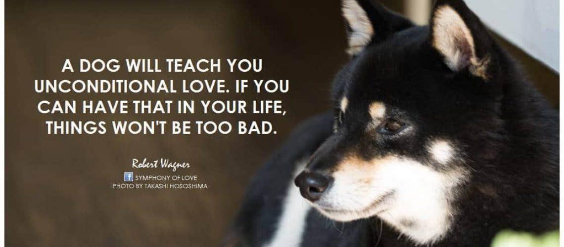 dog-love-quote-5-picture-quote-1