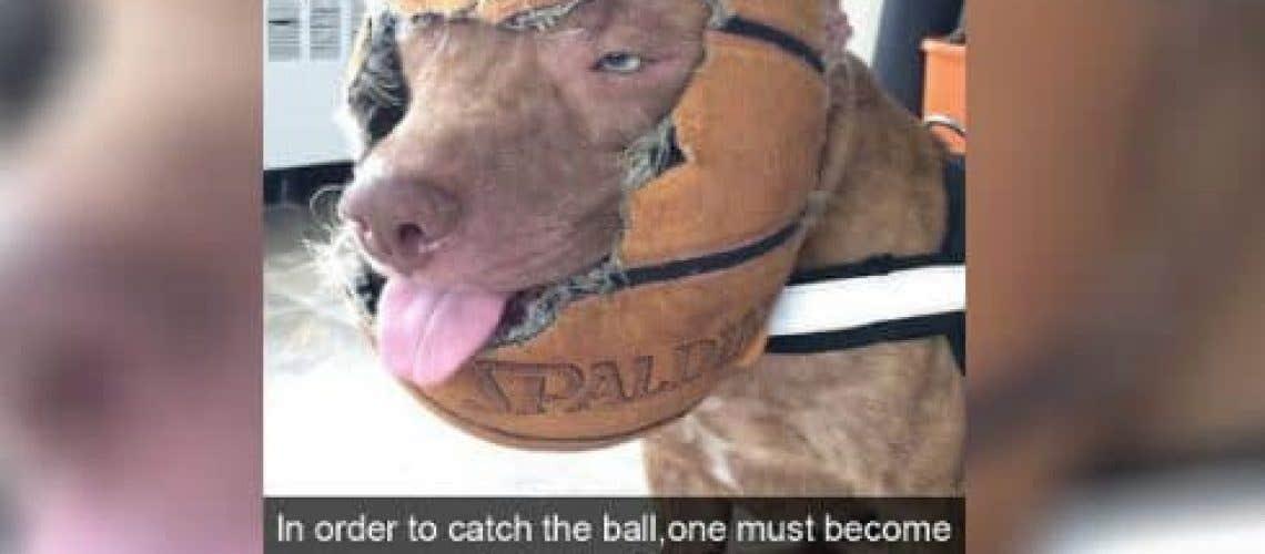 dogs-on-snapchat-18-1-e1500996453500