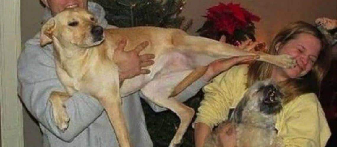 jealous-dog_o_2601837